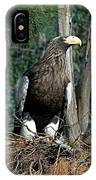 Stellers Sea Eagle IPhone Case