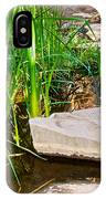 Stepping Stones Across Creek On Lower Palm Canyon Trail In Indian Canyons Near Palm Springs-ca IPhone Case