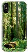 Stout Grove Coastal Redwoods IPhone Case