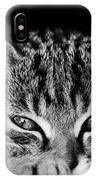 Stray Kitten IPhone Case