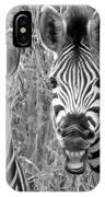Striped Donkeys Zebra Chapman's Race IPhone Case