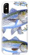 Stripers IPhone Case