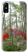 Sugar Maple In Old-growth Canadian IPhone Case