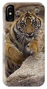 Sumatran Tiger Cub Jumping Onto Rock IPhone Case