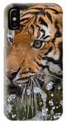 Sumatran Tiger Splashing In The Water IPhone Case