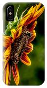 Summer Beauty IPhone Case