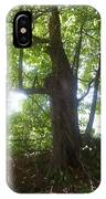 Sun Through Old Maple Tree IPhone X Case