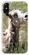Sunbathing Mountain Sheep IPhone Case