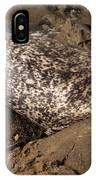 Sunbathing Sea Lion IPhone Case