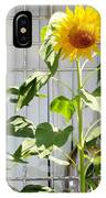 Sunflowers In The Window IPhone Case