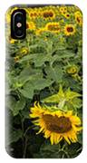 Sunflowers Panorama IPhone Case