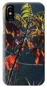 Sunlight Stars On Sumac IPhone Case