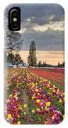 Sunset Over Tulip Flower Farm In Springtime IPhone Case
