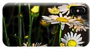 Sunshine Daisies Butter Mellow IPhone Case