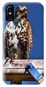 Swainson Hawk IPhone Case