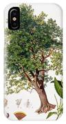 Sweet Chestnut IPhone Case