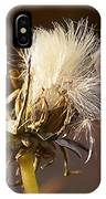 Sweet Dandelions Iv IPhone Case