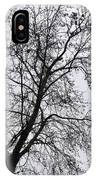 Sweetgum Silhouette On A Rainy Day IPhone Case