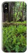 Sword Ferns In Macmillan Provincial Park IPhone Case