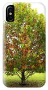 Sycamore Tree IPhone Case