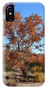 Sycamore Tree In Fall Colors IPhone Case