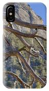 Tahquitz And The Pine IPhone Case