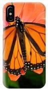 Tangerine Twosome IPhone Case