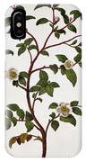 Tea Branch Of Camellia Sinensis IPhone Case