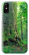The Big Sycamore Tree IPhone Case