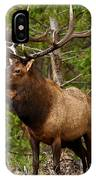 The Bull Elk IPhone Case