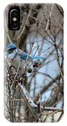 The Gathering Blue Jay IPhone Case