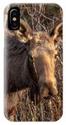 The Stare Down IPhone Case