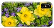 Three Daffodils In Blooming Periwinkle IPhone Case