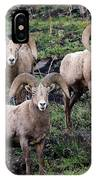 Three Rams IPhone Case