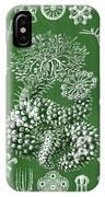 Thuroidea From Kunstformen Der Natur IPhone Case