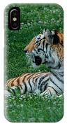Tiger At Rest 1 IPhone Case
