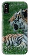 Tiger At Rest 4 IPhone Case