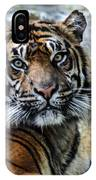 Tiger Facing The Crowd IPhone Case
