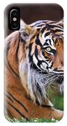 Tiger In The Sun Painting IPhone Case