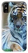 Tiger Posing IPhone Case