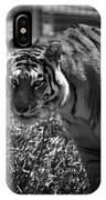 Tiger With A Cold Stare IPhone Case
