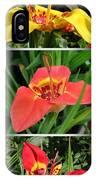 Tigridia Pavonia IPhone Case