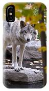 Timber Wolf On Rock IPhone Case