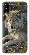Timber Wolf Pictures 1148 IPhone Case