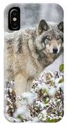 Timber Wolf Pictures 187 IPhone Case