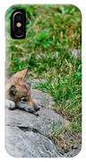 Timber Wolf Pictures 329 IPhone Case