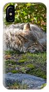 Timber Wolf Pictures 42 IPhone Case