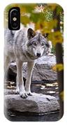 Timber Wolf Pictures 444 IPhone Case