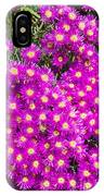 Tiny Dancer - Colorful Midday Flowers Lampranthus Amoenus Flower In Bloom In Spring. IPhone Case