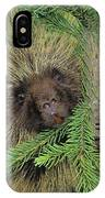 T.kitchin 14107c, Porcupine In Spruce IPhone Case